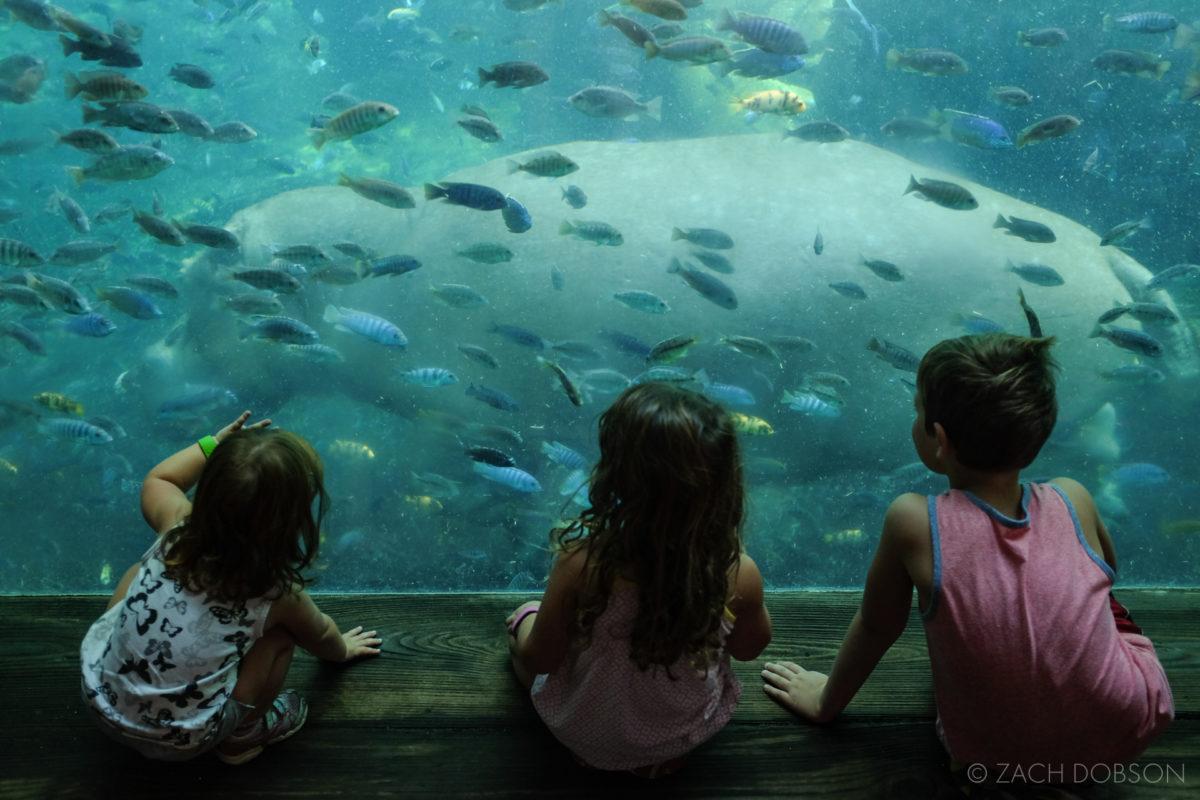 disney-world-animal-kingdom aquarium